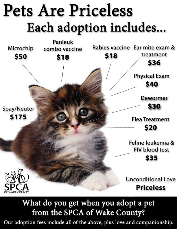 Pet's are Priceless. All that is included in an SPCA Adoption Fee.