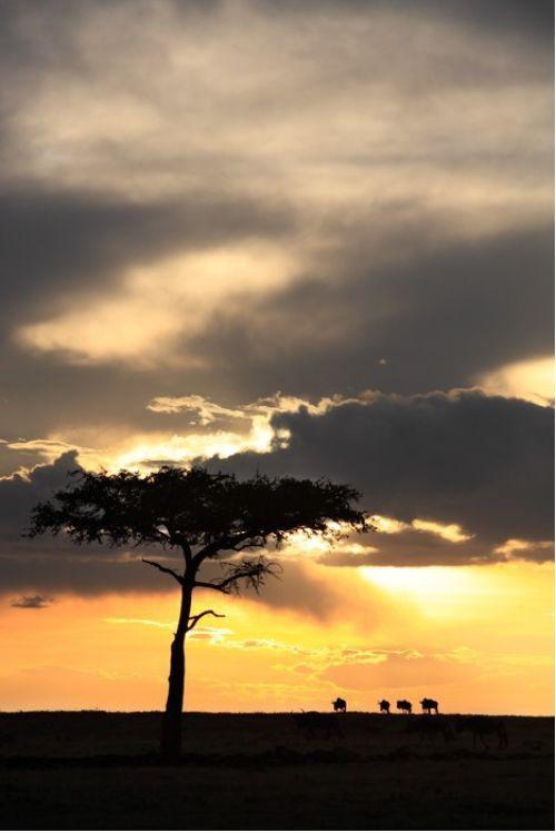Masai Mara sunset from $34.99 | www.wallartprints.com.au #AfricanArt #TravelPhotography