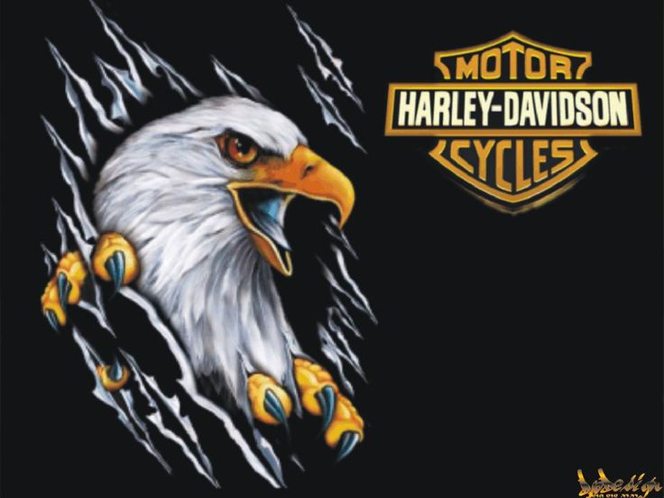 Harley Davidson Eagle Wallpaper 7036 Hd Wallpapers in Bikes - Imagesci ...