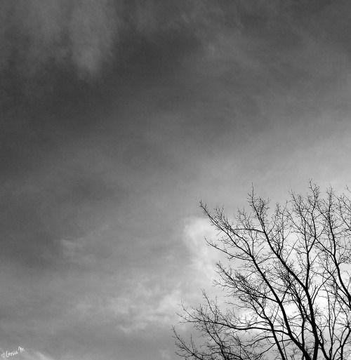 by ♡Gosia M more: http://xgosia-mx.tumblr.com   &   https://www.facebook.com/gosiamphoto  #b&w #gosiam #sky #tree