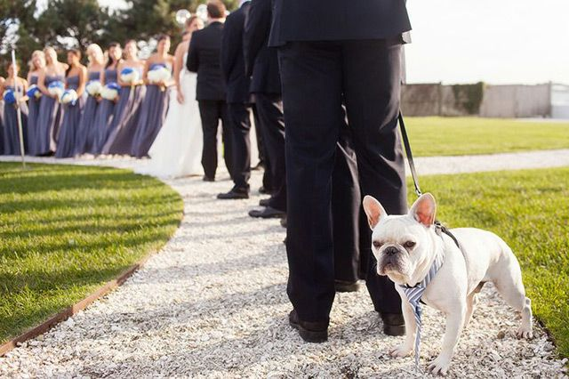 16 Perfect Photos of Pets at Weddings - Mon Cheri Bridals