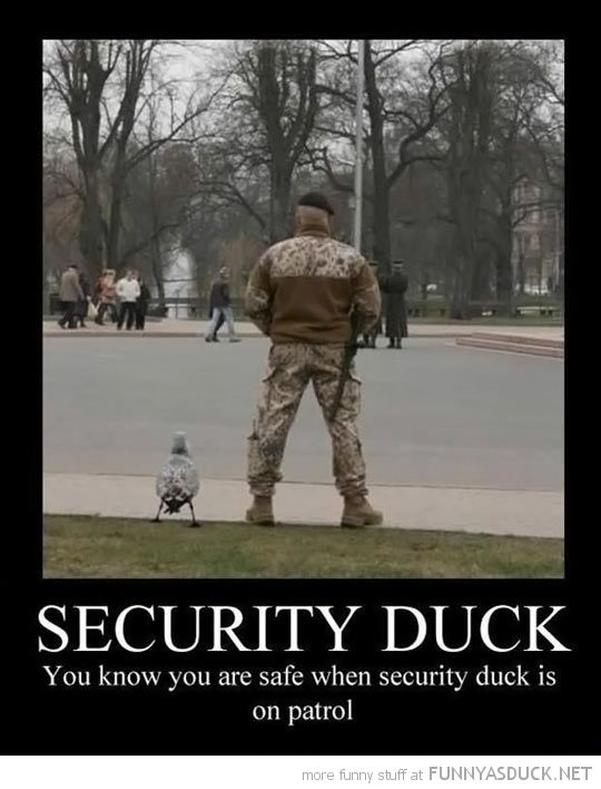 Security Duck we need these