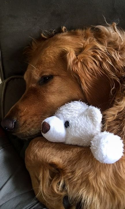 Aaaw that's adorable #goldenretriever