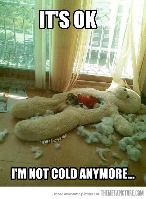 Dog shaming?!