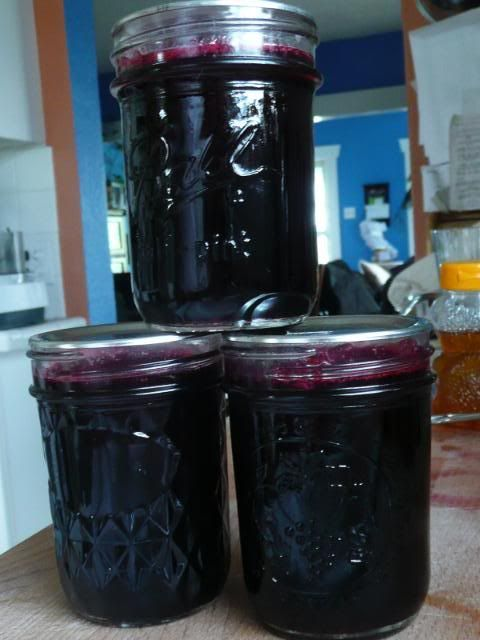 Pint-sized Pioneering: Boysenberry syrup