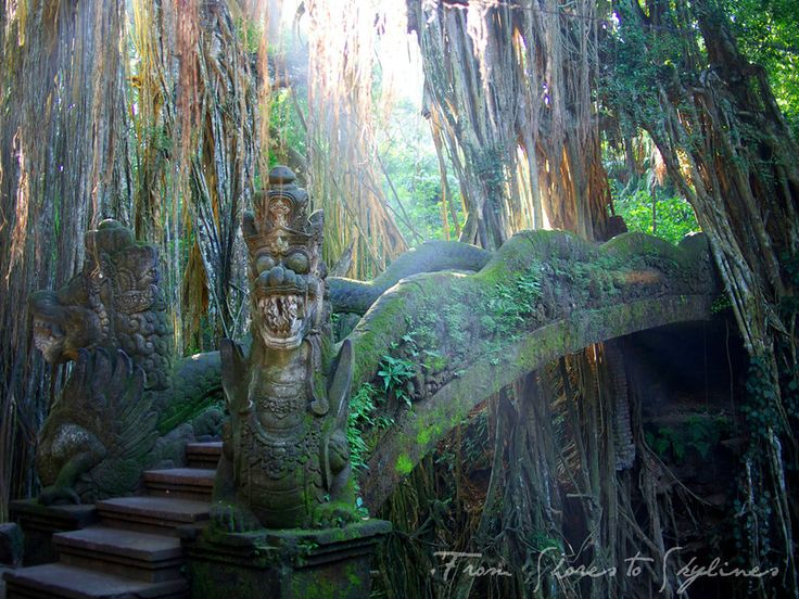 Amazing Things to do In Ubud Bali : Monkey Forest