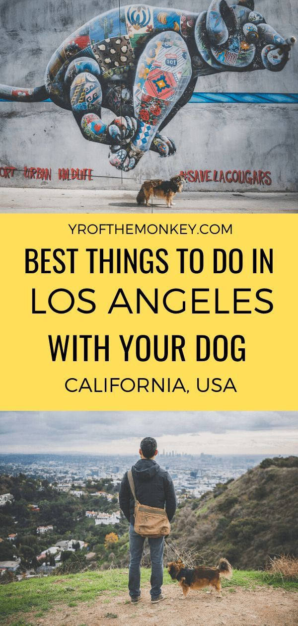 Dog Friendly Los Angeles The Best Things To Do In La With Your Dog California Travel Travel Usa San Francisco Travel