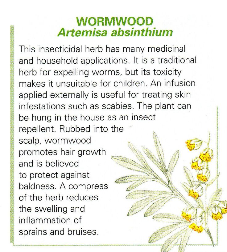 Powerful herb, use caution.  Recognized by the WHO for the treatment of intestinal parasites!