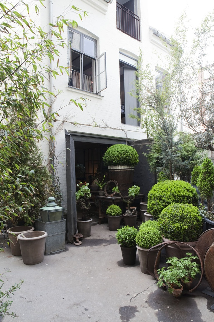 courtyard: Plants Can, Landscape Design, Green, Olives Gustav, Gardens, Boxwood Wreaths, Topiaries, Outdoor Spaces, Design Home