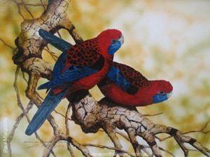 Paul Margocsy Australian Wildlife artist, painting Australian Crimson Rosellas 29x22cm. Red Hill Gallery, Brisbane. www.redhillgallery.com.au