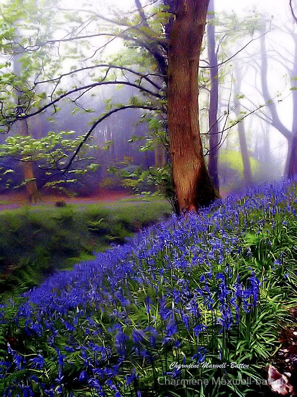 We have free will and must make the choice not merely to be part of nature....Bluebells...Southern England