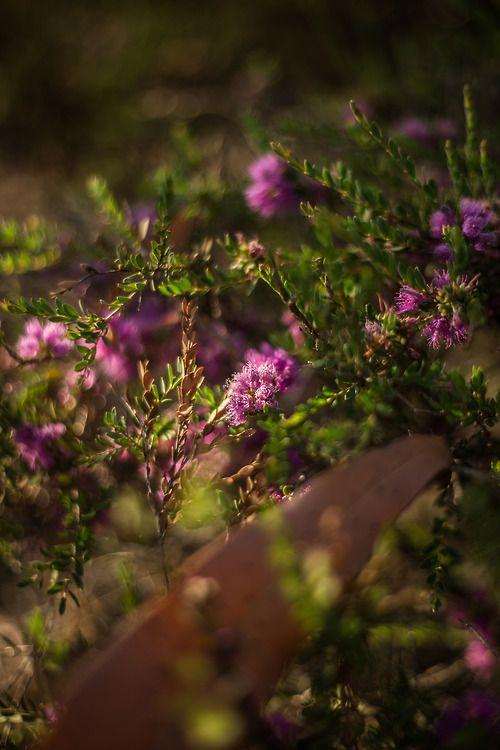 Violet star.