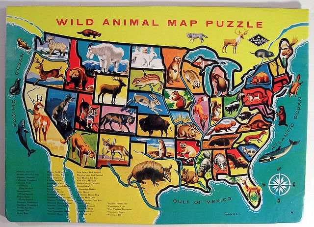 Built-Rite Wild Animal Map Puzzle by Marxchivist, via Flickr.    VT/NH is a shrew (because Yankees are shrewd, maybe?), MA/CT/RI seems to be a flying squirrel or beaver roadkill. Ohio is a skunk.)Animal Wild, Animal United, 50 States, States Maps, America States, Wild Animals, Animal Maps, United States, Social Study