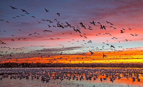 Be on the scene before dawn to capture light like this.  Rick Sammon Bosque del Appache National Wildlife Refuge in New Mexico