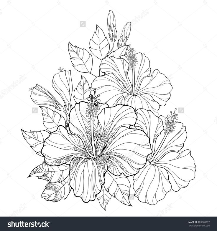 Vector Bouquet With Chinese Hibiscus Or Rosa Sinensis Flower Bud And Leaves