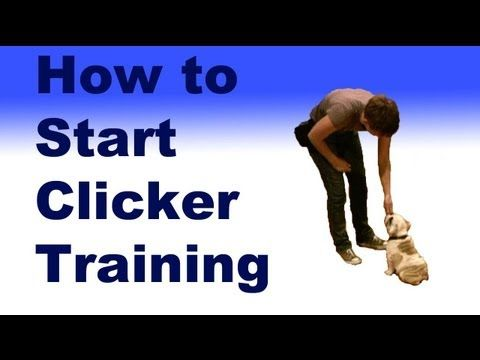 Visit our website: http://dogmantics.com/  Buy our new ebook: http://dogmantics.com/store/  Become a fan on facebook:  http://www.facebook.com/pages/Dogmantics-Dog-Training/75289166216  SUBSCRIBE TO THIS CHANNEL TO SHOW YOUR SUPPORT! We appreciate it:  http://www.youtube.com/subscription_center?add_user=kikopup    How to start clicker training your dog...