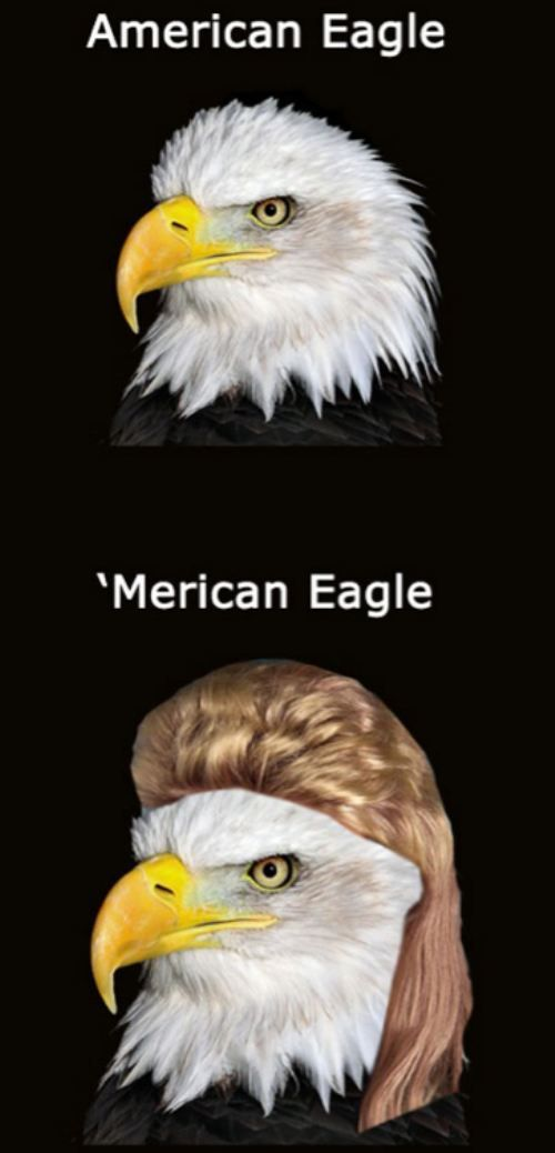 HA HA HA HA HA HA!!Mullet, Laugh, The Eagles, Funny Stuff, American Eagles, Humor, So Funny, Bald Eagles, Giggles