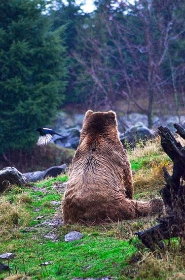 Bear just taking in the beauty