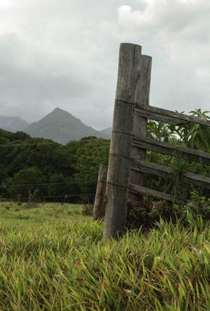 Road to Uki NSW Australia