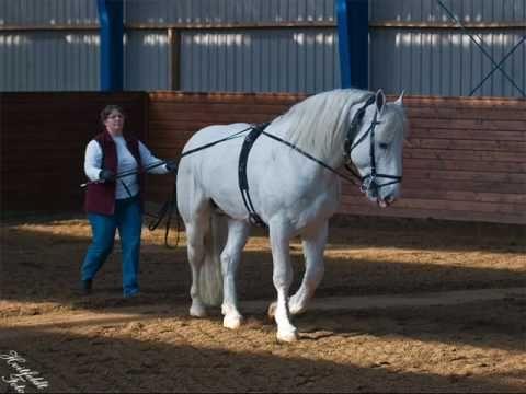 Boulonnais Horse | ... Boulonnais heste Der Film zeigt ein paar unserer Boulonnais Pferde