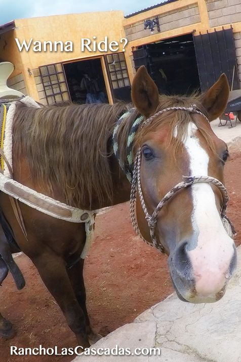 ride a horse, light bay horse, mexican horse, cowboy horse, vaquero horse, caballo, friendly horse, chestnut horse, dude ranch