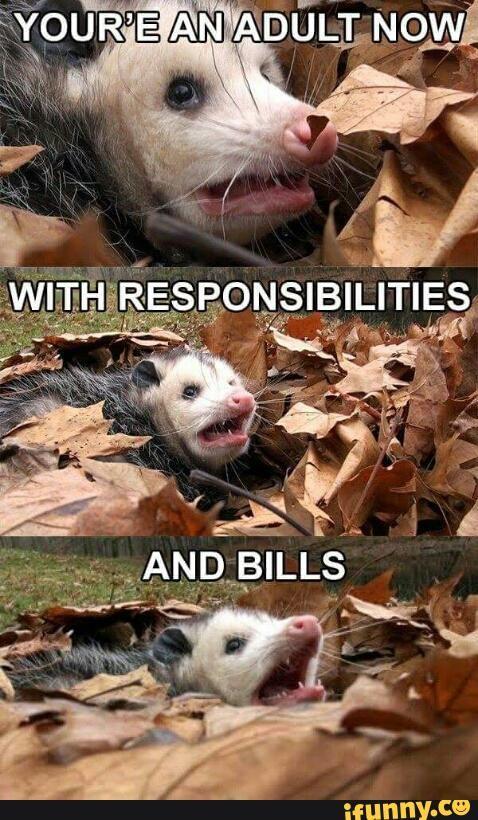 adulthood, opossum, responsibilities