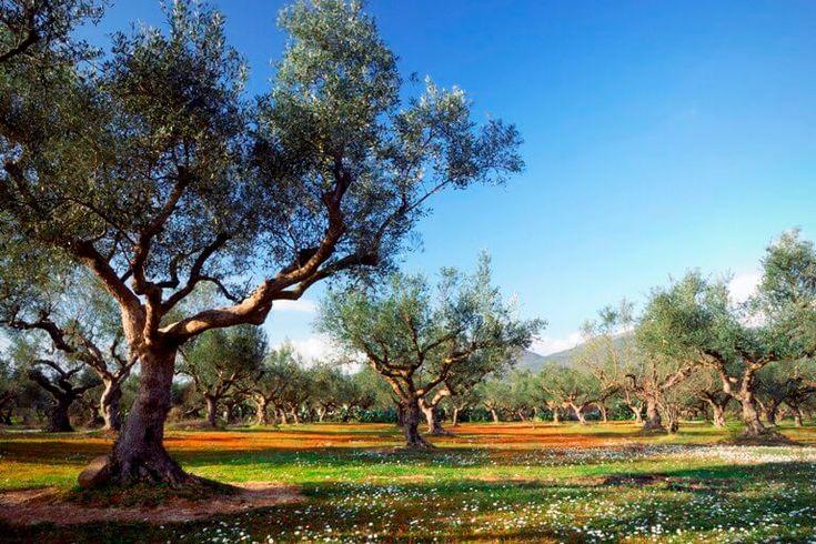 SOLFERIE: Grækenland hører til blandt danskernes favoritdestinationer, og der er masse af muligheder for en skøn ferie på de græske øer. #ferie #rejser