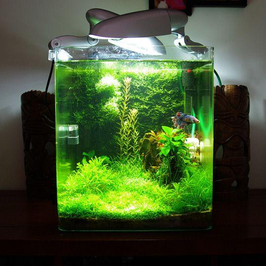 Nano 30l plant page 6 aquascape pinterest for Nano cube fish tank