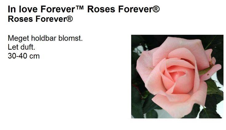 'In love forever'. Mycket hållbar, lätt doft. 30-40 cm.