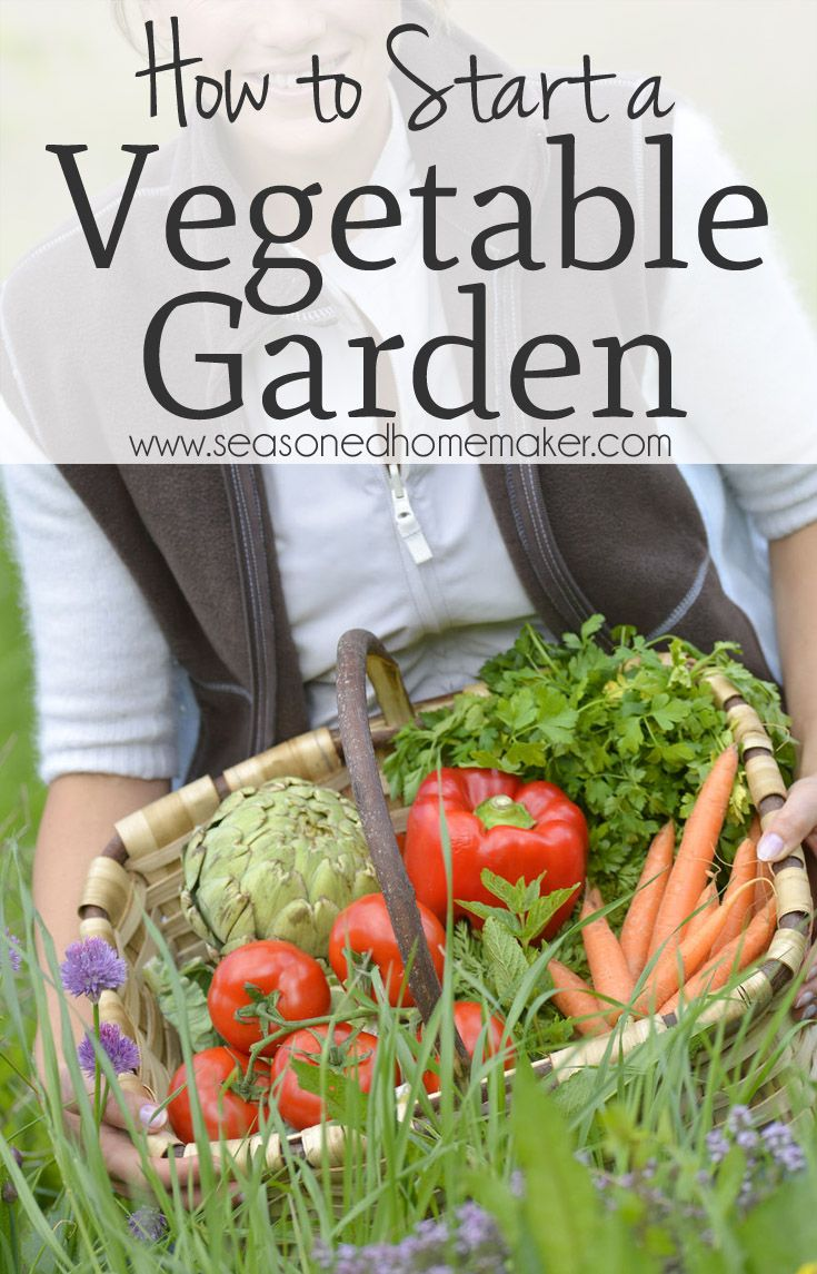 How to start a vegetable garden gardens plants and the for Starting a vegetable garden