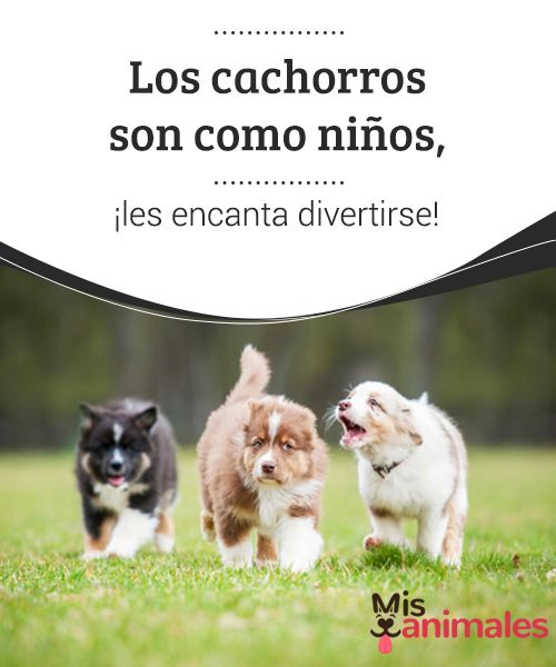 Los #cachorros son como niños, ¡les encanta divertirse!  No obstante, al igual que con los niños, hay que extremar las #precauciones para que no se #lastimen mientras corren, saltan o se revuelcan. Es muy #importante comenzar a ponerles límites sobre lo que pueden y no pueden hacer.