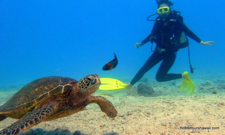 Scuba Dive Shop - Learn More About Our Waikiki Dive And ...