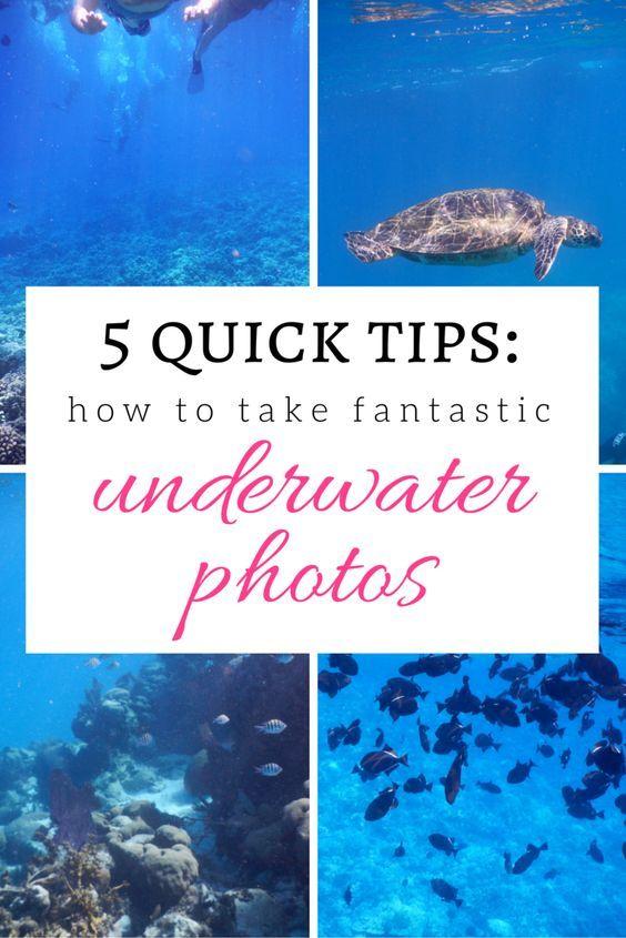 Tipps für die Unterwasserfotografie: 5 Möglichkeiten zur Verbesserung Ihrer Fotos   – Travel Tips and Guides