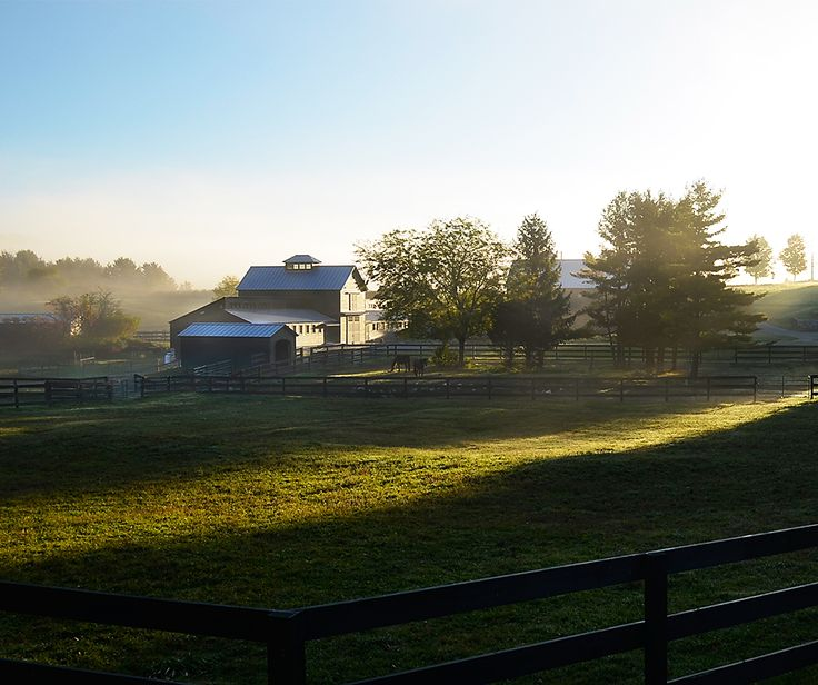 Summer Escape In The Berkshires: The Morning's Mist Rising. Horse Farm Near Gt Barrington