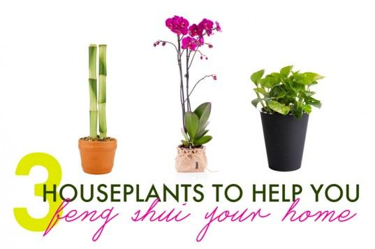 3 Houseplants to Help You Feng Shui Your Home for Spring | Inhabitat - Sustainable Design Innovation, Eco Architecture, Green Building