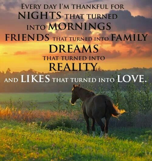 447 best images about Horse Quotes on Pinterest | Trainers ...