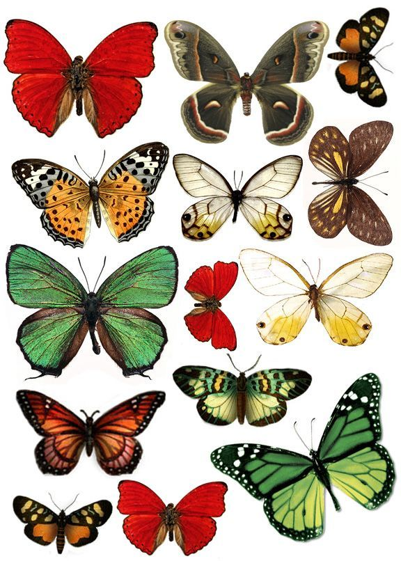 pages and pages of beautiful free vintage butterfly printables
