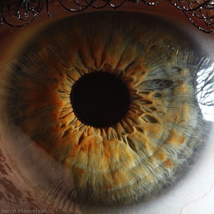 Human Eye   Suren Manvelyan