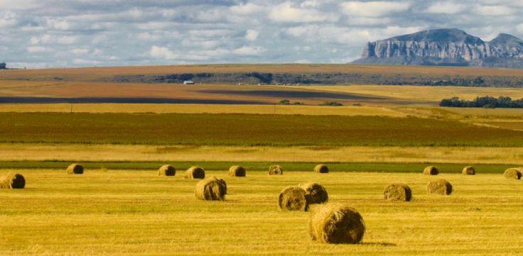 Hay bales between Bloemfontein and Clarens.