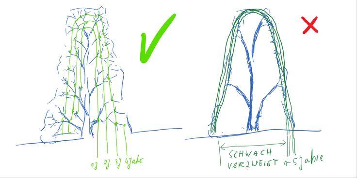 Kennst du die drei Arten von Hecken und wie du die am leichtesten schneidest?