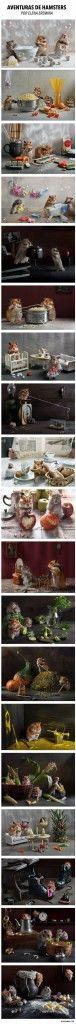 Aventuras de hamsters. Fotografías por Elena Eremina.