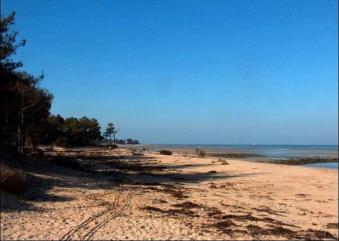 Le Bois de Trousse-Chemise, Île de Ré