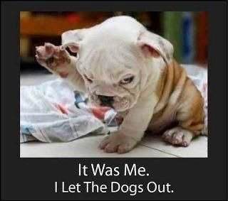 dog pics with captions | Funny dog photos with captions #1 | Motley Dogs