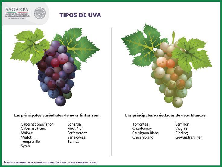 Las principales variedades de uvas tintas son: Cabernet Sauvignon, Cabernet Franc, Malbec, Merlot, Tempranillo, Syrah, Bonarda, Pinot Noir, Petit Verdot, Sangiovese y Tannat. Dentro de las variedades de uvas blancas más importantes existen: Torrontés, Chardonnay, Sauvignon Blanc, Chenin Blanc, Semillón, Viognier, Riesling, Gewurstraminer. SAGARPA SAGARPAMX