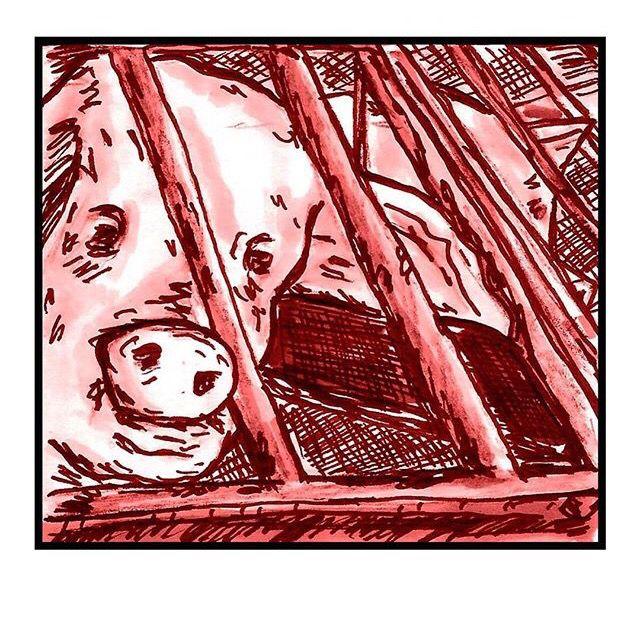 Los cerdos son animales extrovertidos y sensibles. En las granjas pasan sus vidas enteras hacinados en sucios almacenes con el estrés constante del confinamiento intensivo donde se les niega todo lo que es importante y natural para ellos. Las madres pasan la mayor parte de sus miserables vidas en pequeñas jaulas de gestación, demasiada pequeñas incluso para que se puedan dar la vuelta. Son impregnadas una y otra vez hasta sus cuerpos no pueden aguantar, momento en el que son enviadas al…
