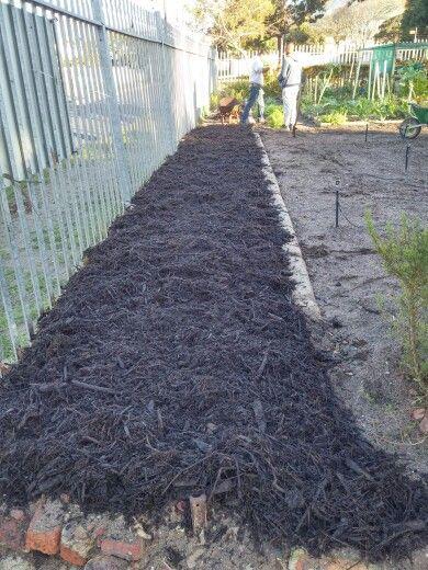 Back hedge bed