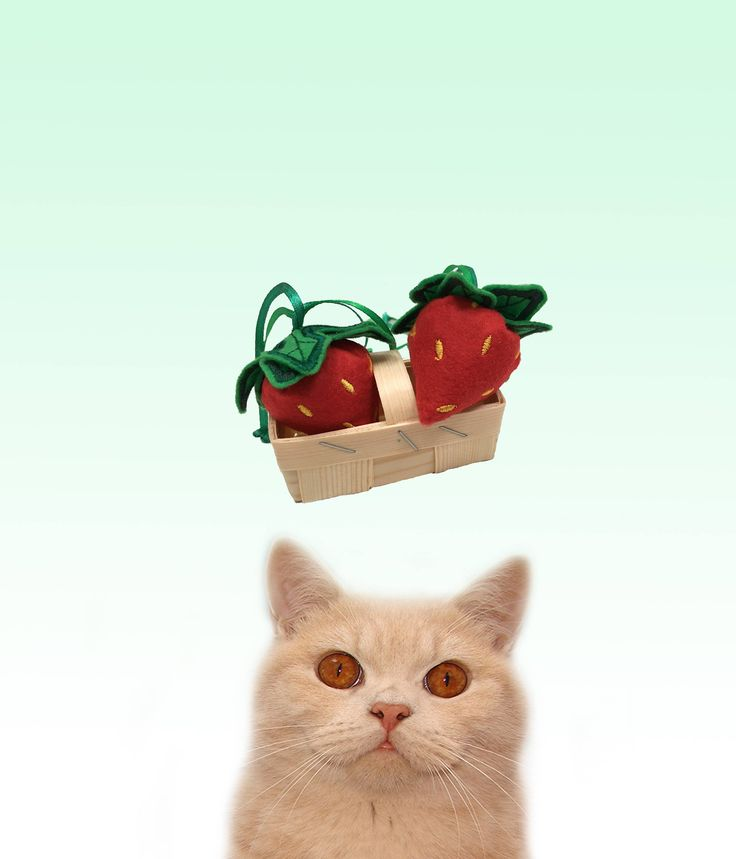Freak Meowt, Handmade Unique  Canadian Catnip Scrumptious Strawberries cool cat toys gifts for cats by FreakMEOWt on Etsy https://www.etsy.com/listing/275555812/freak-meowt-handmade-unique-canadian
