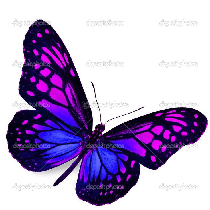 imagenes de mariposas reales azules - Buscar con Google