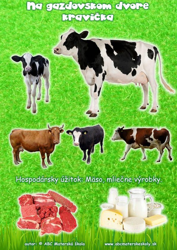 gazdovský dvor krava