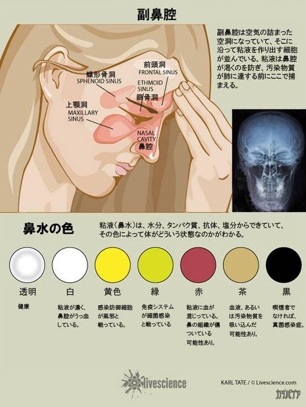 鼻水の色で健康状態をチェックしよう カラパイア 健康 鼻水 歯科